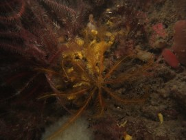 Feather Stars, Sponges, & Sea Squirts