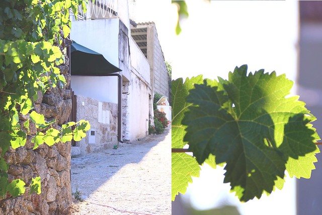 grape leaves and stone house