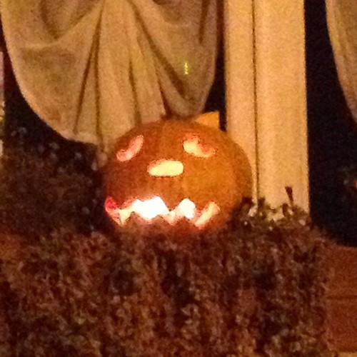 Halloween #halloween #zucca
