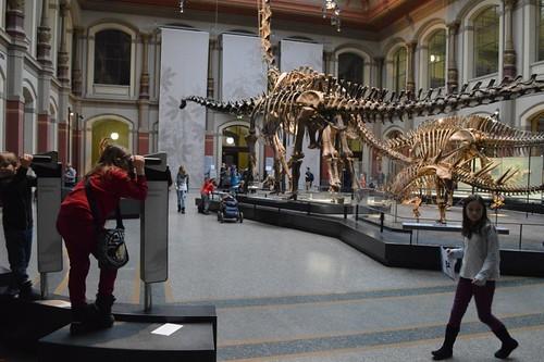 MuseumNaturkunde