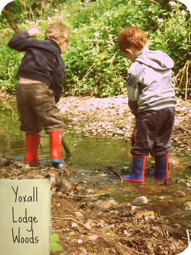 Yoxall Lodge Woods