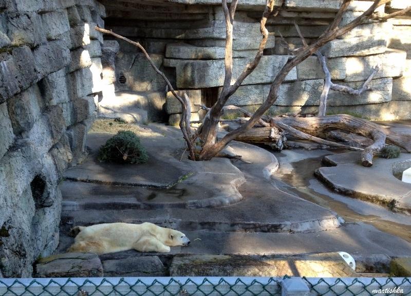 San Francisco Zoo (21)
