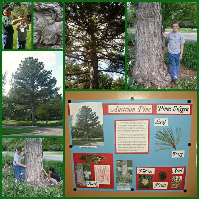 Adopt a Tree Luke