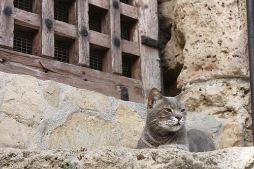 20130524_5560_Kyrenia-cat_Vga