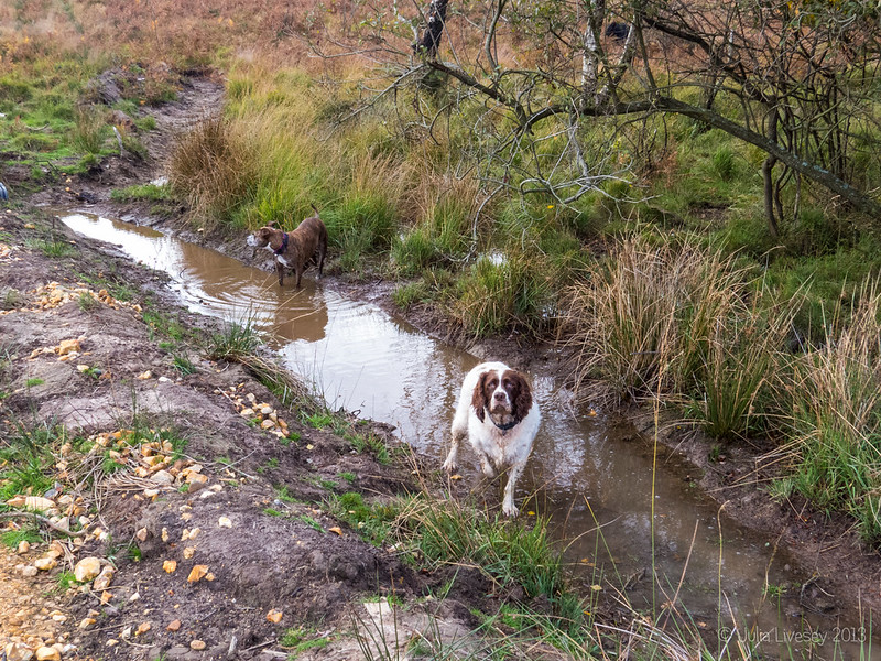 Max is happy now the gullies to catch the run-off have water in them