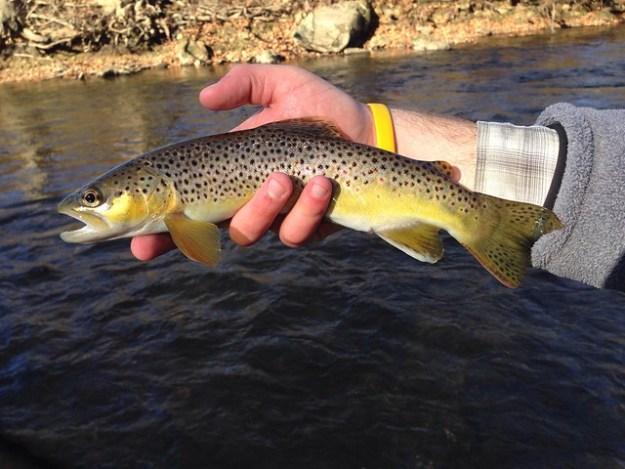 Fly Fishing the Gunpowder River