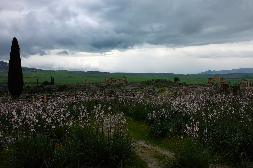 Volubilis, wildflowers take over