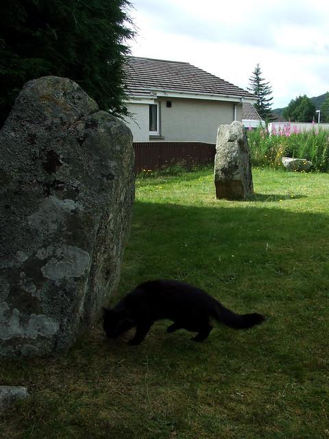 black cat at Aviemore stone circle