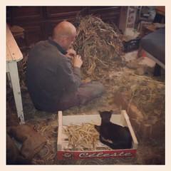 Grizli, inspecteur des haricots finis