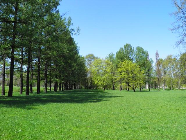 Аллея деревьев