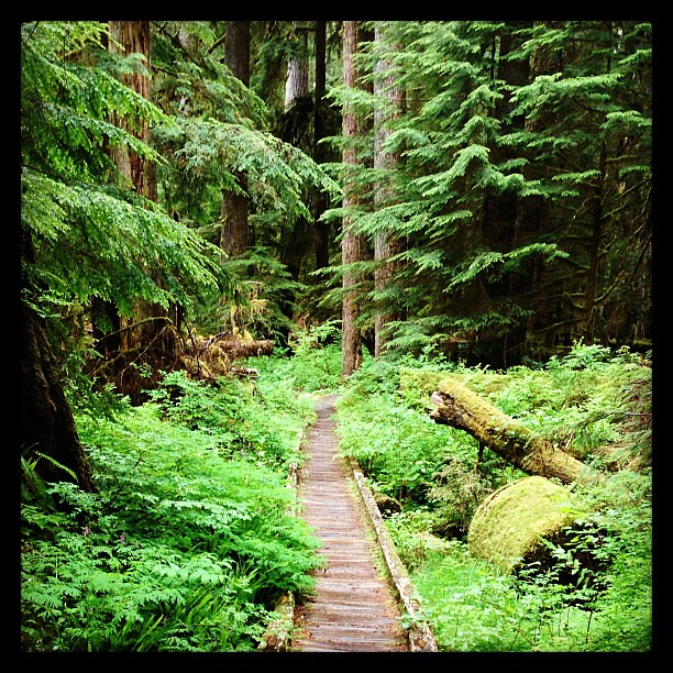 Lover's Lane Trail, Olympic National Park.