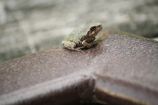 frog visitor