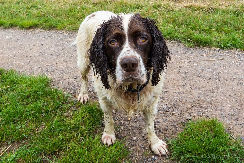 Wet dog alert!