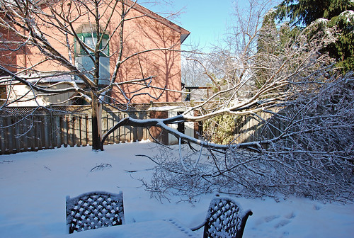Ice Storm 2013 Norway Maple damage