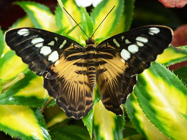 Butterfly #11