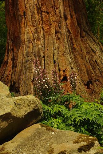 20130807-73_Redwood Tree in Chatsworth's Rockery Garden by gary.hadden