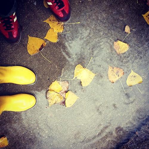 First autumnal rainy walk!