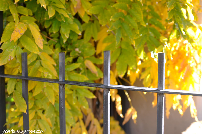 SF_fence_yellow_web