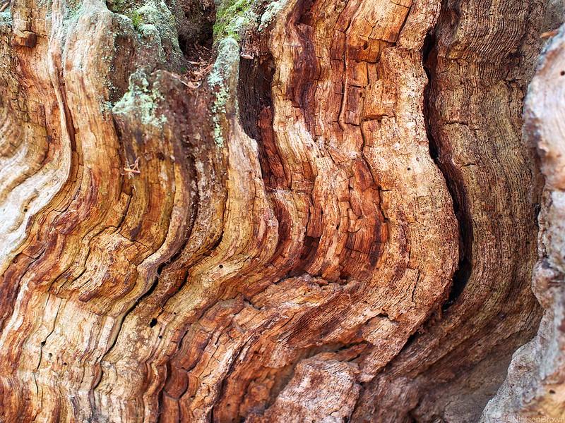 Oak Waves