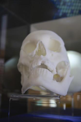 3D printed replica of Richard III's skull