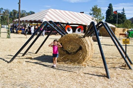 hay spider