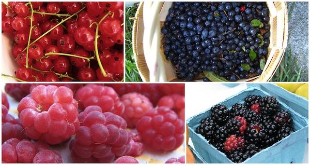 mixed berries3 copy