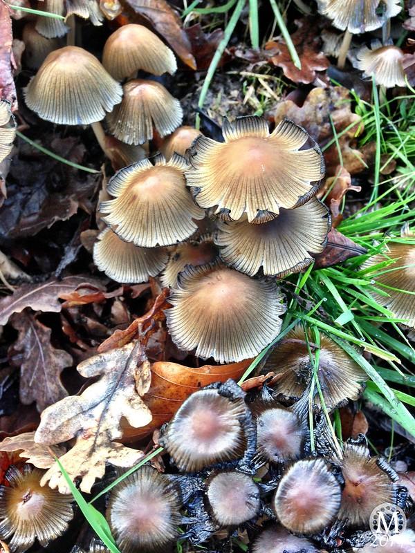 Mushrooms ~ Fungi