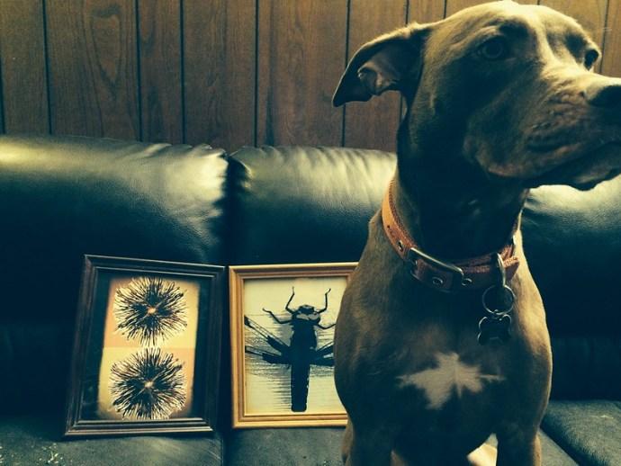 Sadie and my prints.