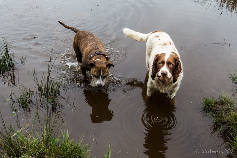 Jez and Max in the muddy pond