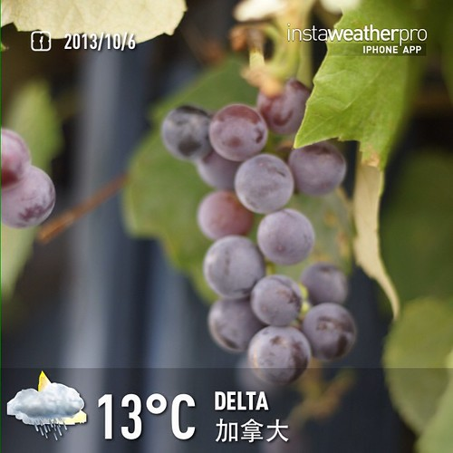 #weather #instaweather #instaweatherpro  #sky #outdoors #nature #world #love #followme #follow #beautiful #instagood #fun #cool #like #life #nice #happy #colorful #photooftheday #amazing #delta #加拿大 #night #autumn #ca ☔️晚安朋友