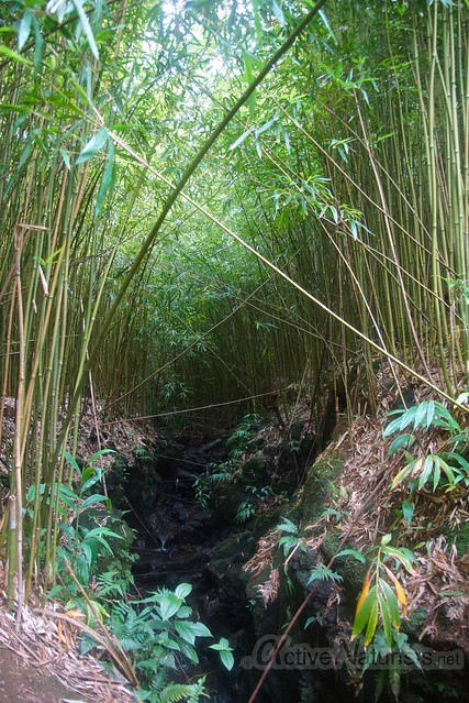 bamboo forest 0002 Na'ili'ili-haele, Maui, Hawaii, USA