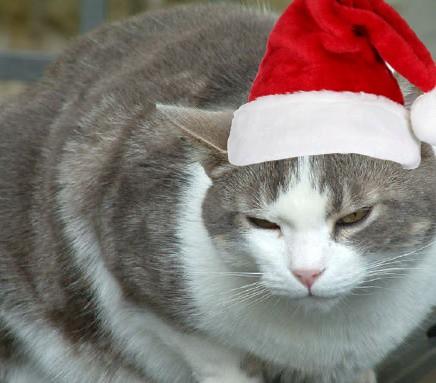 sunday legends: yule cat
