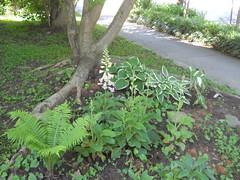 Front shade garden 5/12/2013
