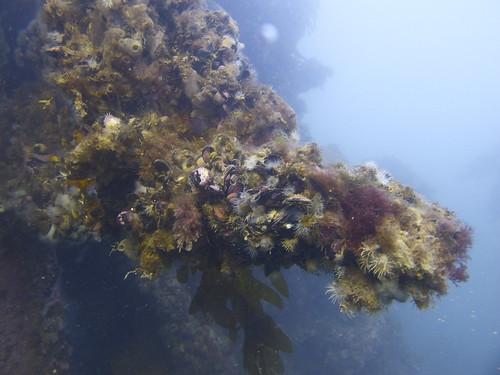 Punta Loma