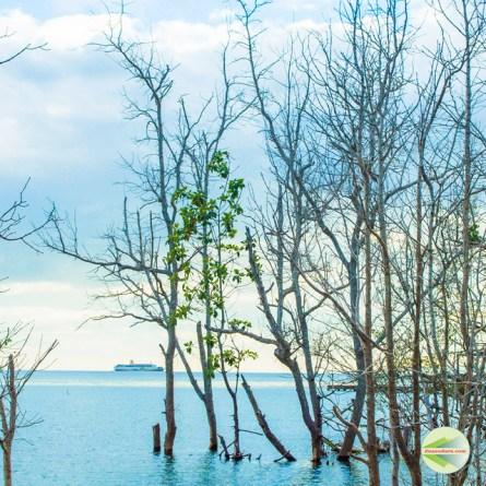 Destinasi Wisata Pulau Lembeh: Ekowisata Mangrove Pantai Kahona, Pasir Panjang