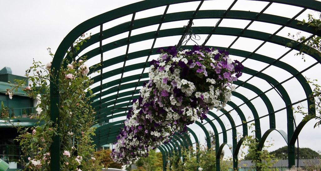 Wimbleton Flowers