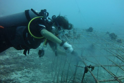 Biorock cleaning: scrubbing away the algae