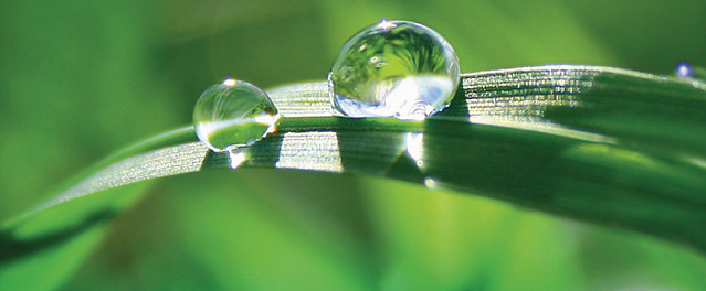 ¡Verde para tu hogar!