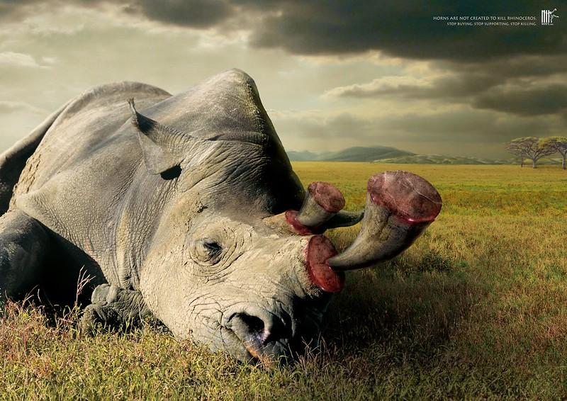 Wildlife-Friend-Foundation-Thailand-Horns