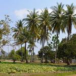 16 Kampot 51