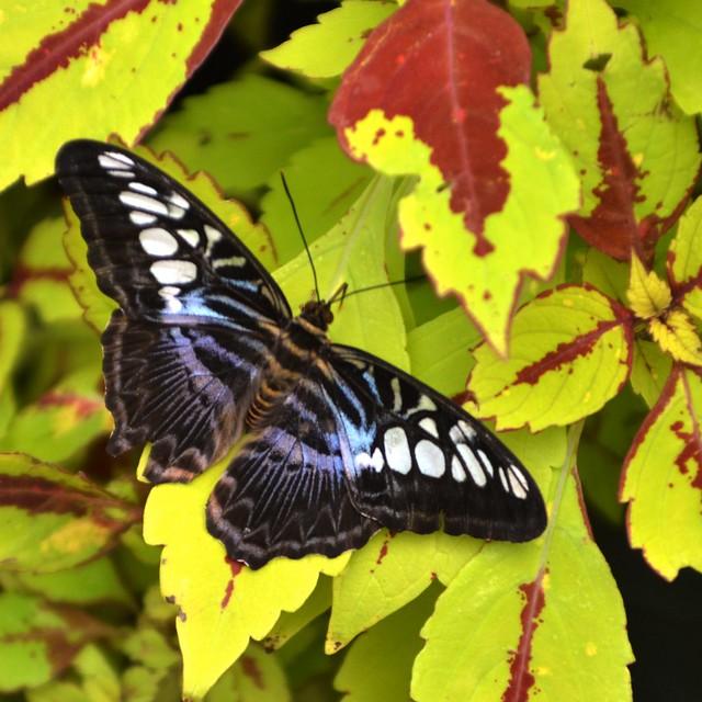 Butterfly #8