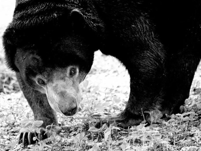 Indian Sloth Bear Hyderabad Zoo