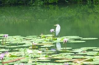 P1060579 Infierno Umi Jigoku (Beppu) 13-07-2010