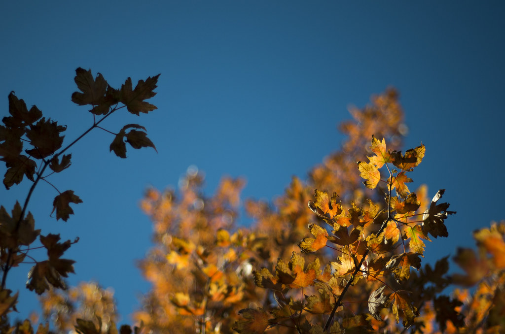 Glimpses of Fall