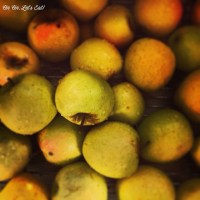 Apple Jelly [recipe]