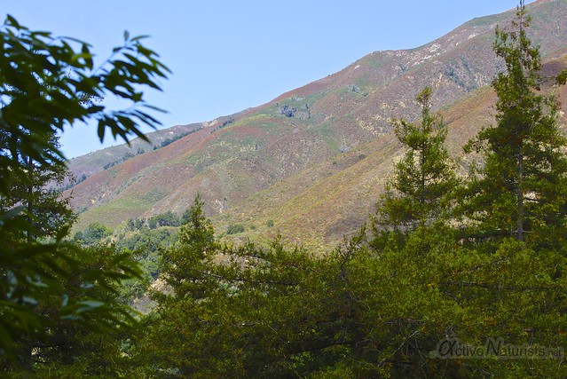 view 0000 Pine Ridge Trail, Big Sur, CA, USA