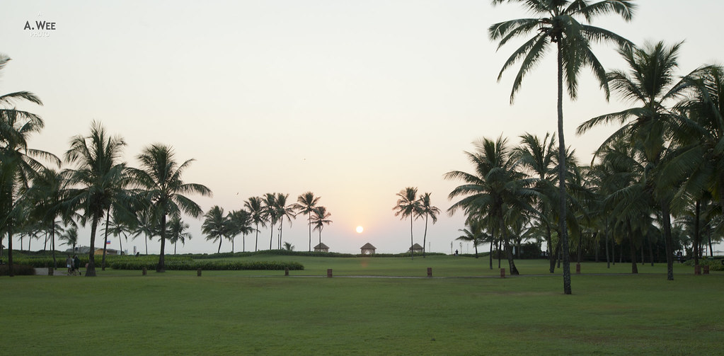 The Palm Grove between the Resort and the Beach