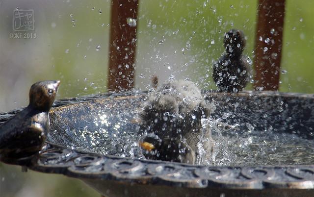 Robins Bath 09