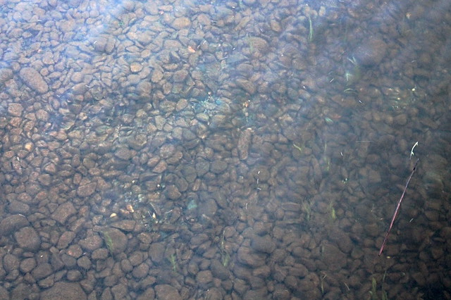 Камны