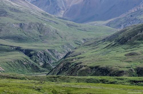 Tundra,Denali